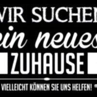 """Suchen """"DRINGEND"""" Wohnung oder Haus....!!!!!"""