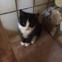 4 kleine Kätzchen/ Katerchen suchen ein Zuhause, entwurmt